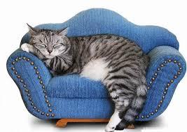 gatti sul divano