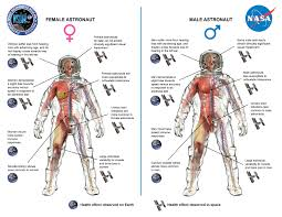 women in space part two what s gender got to do it a lab nasa and nsbri created a diagram summarizing