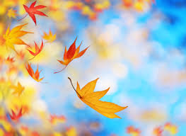 Image result for photos fall leaves