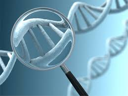 rhesus factor genetics example essay