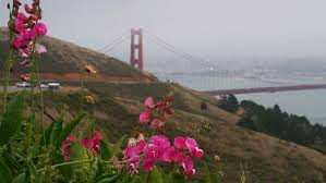 Image result for san francisco spring