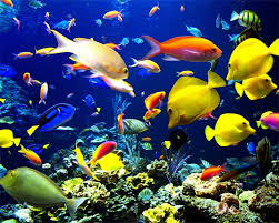 """Результат пошуку зображень за запитом """"фото коралові рифи океан"""""""