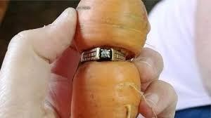 Yıllardır kayıp olan yüzüğünü havuca takılı olarak buldu
