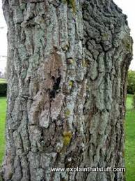 <b>Wood</b> - An introduction to its structure, properties, and uses