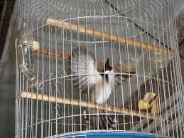 Quan chức chơi chim