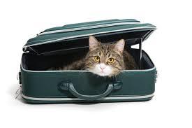 """Résultat de recherche d'images pour """"chat en vacances"""""""