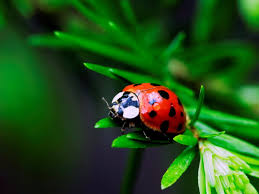 Image result for wallpaper ladybird