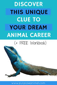 images about exotic animal careers career are you struggling to decide on your dream animal career well the answer be