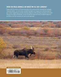 com wildlife spectacles mass migrations mating rituals com wildlife spectacles mass migrations mating rituals and other fascinating animal behaviors 9781604696714 vladimir dinets books