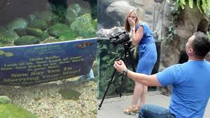 An otterly adorable proposal sees couple engaged thanks to some ...