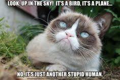 Grumpy Cat on Pinterest | Grumpy Cat Meme, Funny Grumpy Cats and ... via Relatably.com