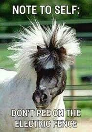 Note to self - Horse meme | Funny Dirty Adult Jokes, Memes & Pictures via Relatably.com