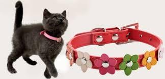 Купить <b>ошейники</b> для кошек по низкой цене с доставкой по ...
