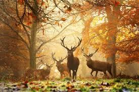 Risultati immagini per autunno paesaggi
