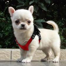 Шлейки для собак - огромный выбор по лучшим ценам | eBay