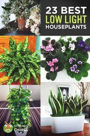 low light houseplants best low light office plants