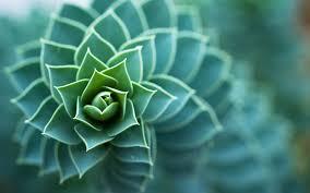 plante grasse floue