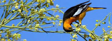 Attract Birds: A Dozen Native Trees and Shrubs that <b>Birds Love</b>