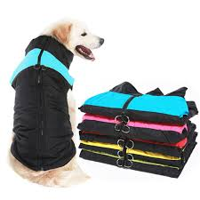Golden <b>Pet</b> Store - Amazing prodcuts with exclusive discounts on ...