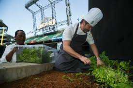 centerplate salaries glassdoor centerplate photo of safeco field executive chef michael johnson harvests mixed greens from the safeco