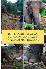 is it your dream to ride an elephant on your asia trip think is it your dream to ride an elephant on your asia trip think again and