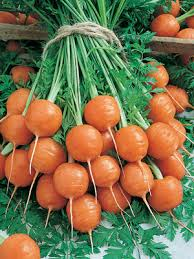Image result for heirloom carrots