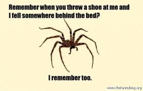 Funny Blog | Frightening spider. via Relatably.com