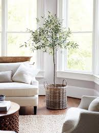 space living room olive: indoor olive tree with wicker basket in neutral living room on thou swell thouswellblog