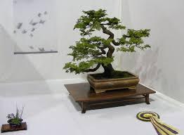 1000 images about bonsai trees on pinterest bonsai trees bonsai and bonsai garden bonsai tree interior