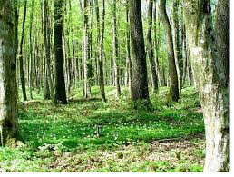 classification of n forest essay new scheme of examination for n forest service examination