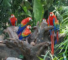 <b>Parrot</b> Facts: Habits, Habitat & Species | Live Science