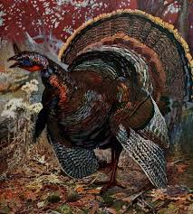 flannery o connor mysteries and manners turkey
