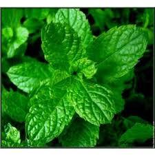 """Résultat de recherche d'images pour """"chlorophylle"""""""