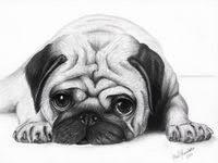 PUGS: лучшие изображения (176) | Мопс, Собаки и Животные
