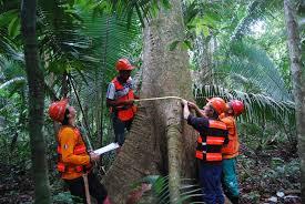 Resultado de imagem para dia do engenheiro florestal