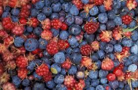 renewable resource alaska wild berries from the innoko national wildlife refuge renewable resources