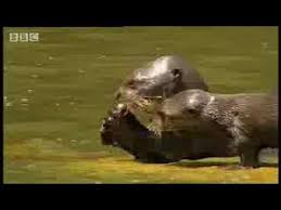 <b>Rainforest animals</b> of the Amazon <b>jungle</b> - BBC wildlife - YouTube