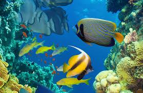 Resultado de imagem para peixes do mar
