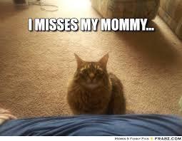 Sad kitty! Meme Generator - Captionator Caption Generator - Frabz via Relatably.com