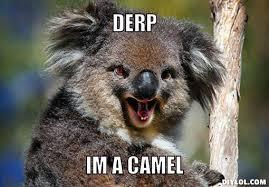 Funny Koala Memes Image Gallery - Photonesta via Relatably.com