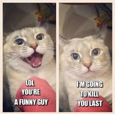 Stupid Cat Memes that I shouldn't like but i do... on Pinterest ... via Relatably.com