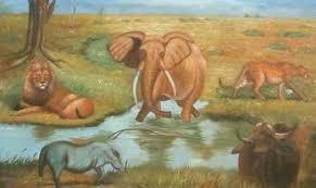 Resultado de imagen de fotos de elefantes
