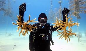 Image result for growing coral