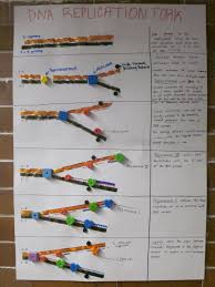 dna replication poster high school biology dna and dna replication poster