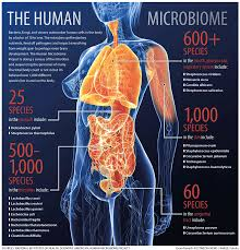 Image result for human gut