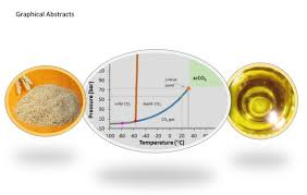 <b>Bioactive</b> Compounds of a Wheat Bran Oily <b>Extract</b> Obtained with ...