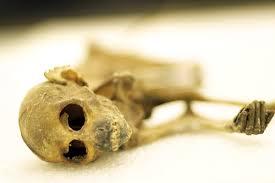 Mummified monkey found in Minneapolis Dayton
