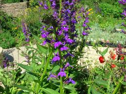 Image result for garden plants