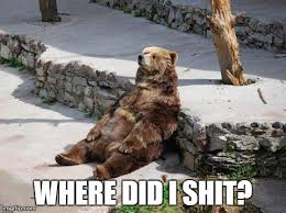 Perplexed Bear   4stayingwell via Relatably.com