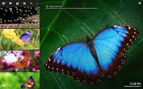 My Butterflies New Tab